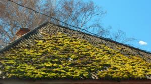 Pensacola roofing companies